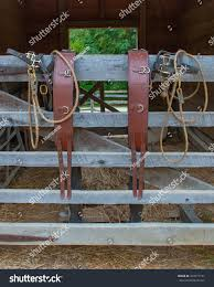 Pair Bridles Harnesses Draped On Horse Stock Photo Edit Now 433271197