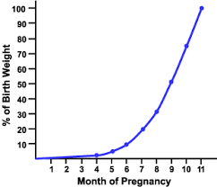management of the pregnant mare