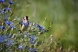 10 صور طيور تطير وتحلق في السماء
