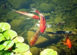 best filter for koi pond top 6 picks