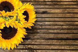 Yellow Sunflower Bouquet Com Imagens Arte Girassol Molduras