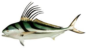 55 roosterfish half mount fish replica
