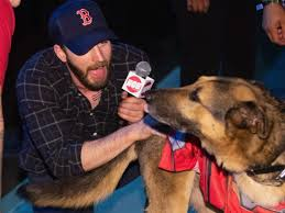 Chris Evans fans flood Twitter with puppy photos after nude photo leak -  Insider