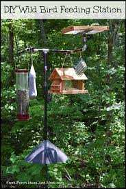 wild bird feeding station backyard