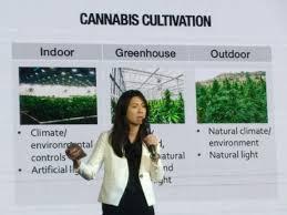 Marijuana body touts legalisation dividends