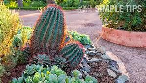 5 sharp ways to garden with cactus