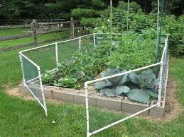 Fencing With Chicken Wire Google Search Fenced Vegetable Garden Cheap Garden Fencing Diy Garden Fence