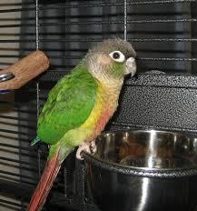pet birds by lafeber co