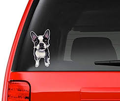 Amazon Com Boston Terrier Full Color Art Vinyl Auto Decal Sticker Or Any Smooth Surface Everything Else