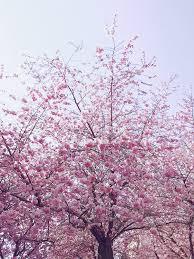 اروع صور ورد حب وأزهار رومانسية جميلة جدا