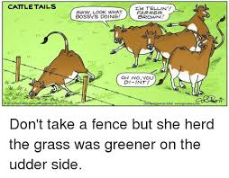 Cattle Tails Aww Look What Far Mer Brown Oh No You Di Int 4 17 2016 Dan Collins Wwwcollin Di Versal Uclick Wwwgocomicscom Don T Take A Fence But She Herd The Grass Was