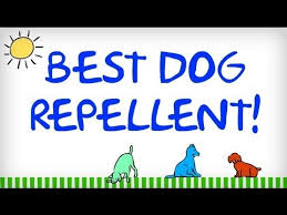 dog repellent tips for repelling dogs