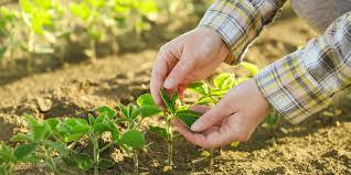 Como aliar agronegócio e sustentabilidade sem deixar de lucrar?