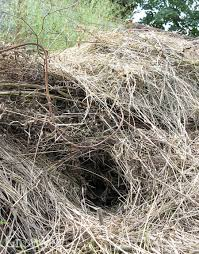 How To Keep Rats Out Of Your Compost