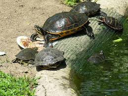 Our Old Turtle Pond