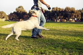 Best Wireless Dog Fence With A Remote Trainer Wireless Fence Guide