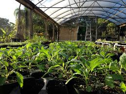 vegetable and herb plants for south florida