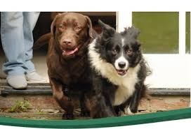 Pet Fence Containment Systems For Dogs Petsafe New Zealand