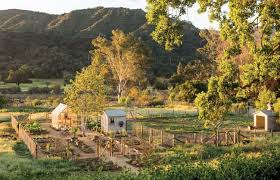 the new vegetable garden plan the