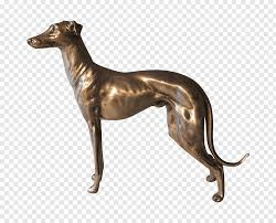 dog breed italian greyhound cartoon