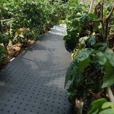 china high quality outdoor vegetable