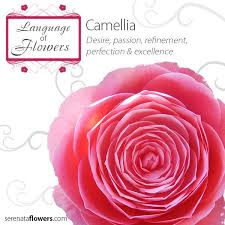 language of flowers flowermeaning flowerlanguage camellia