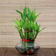 bamboo plant glass vase mitee