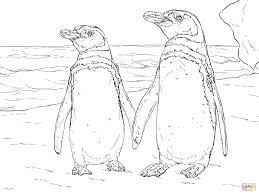 Humboldt Pinguinpaartje Kleurplaat Gratis Kleurplaten Printen