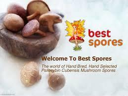 Buy Hand Bred Shroom Spores Online