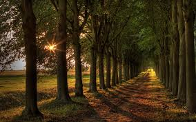 sun trees road 1920x1200 hd picture