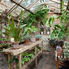 victorian indoor plants caring for old