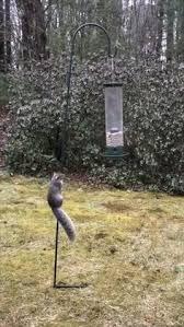 500 Baby Squirrel Care Ideas In 2020 Squirrel Baby Squirrel Cute Squirrel