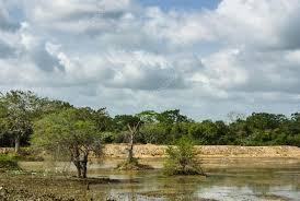 「ウィルパットゥ国立公園」の画像検索結果