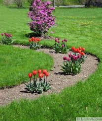 spring flowers and yard landscaping