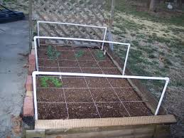 raised bed protected from squirrels