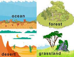 FREE Animal Habitat Flashcards! | Animal habitats, Habitats, Animals of the world