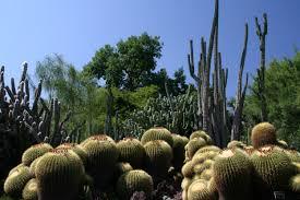 file desert garden jpg wikimedia commons