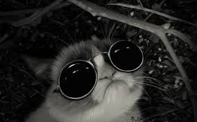 grumpy cat hd wallpapers desktop and