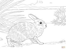 marsh rabbit coloring page free
