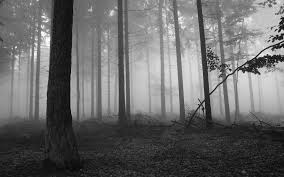 dark forest wallpapers hd resolution