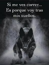 Si me ves correr  Frases de lobos Frases de sabiduria Frases  motivadoras