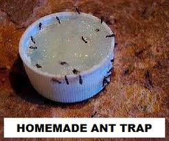 homemade ant trap home remes