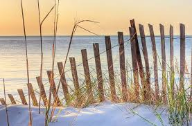 Dune Fence On The Beach At Sunset Photograph By Elizabeth Spencer
