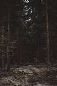 a dark forest wallpaper