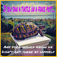 Turtle On A Fencepost Quote The Fool Christian Perspective Reactive Attachment Disorder