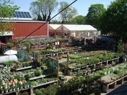 starkie bros garden center plant