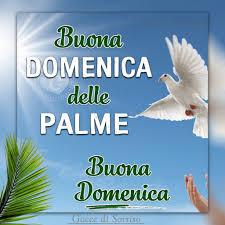 Buona Domenica delle Palme #iorestoacasa, immagini e video da ...