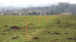 How To Use Electric Fences With Sheep Insights Farmers Guardian