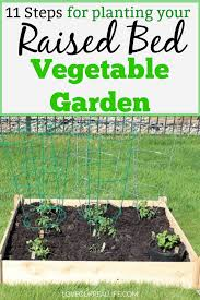 growing tomatoes and other veggies