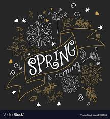 hand drawing lettering quote spring is coming vector image